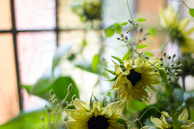 bloom-sunflowers-and-ivy